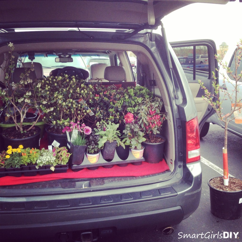 Buying new azaleas at Home Depot