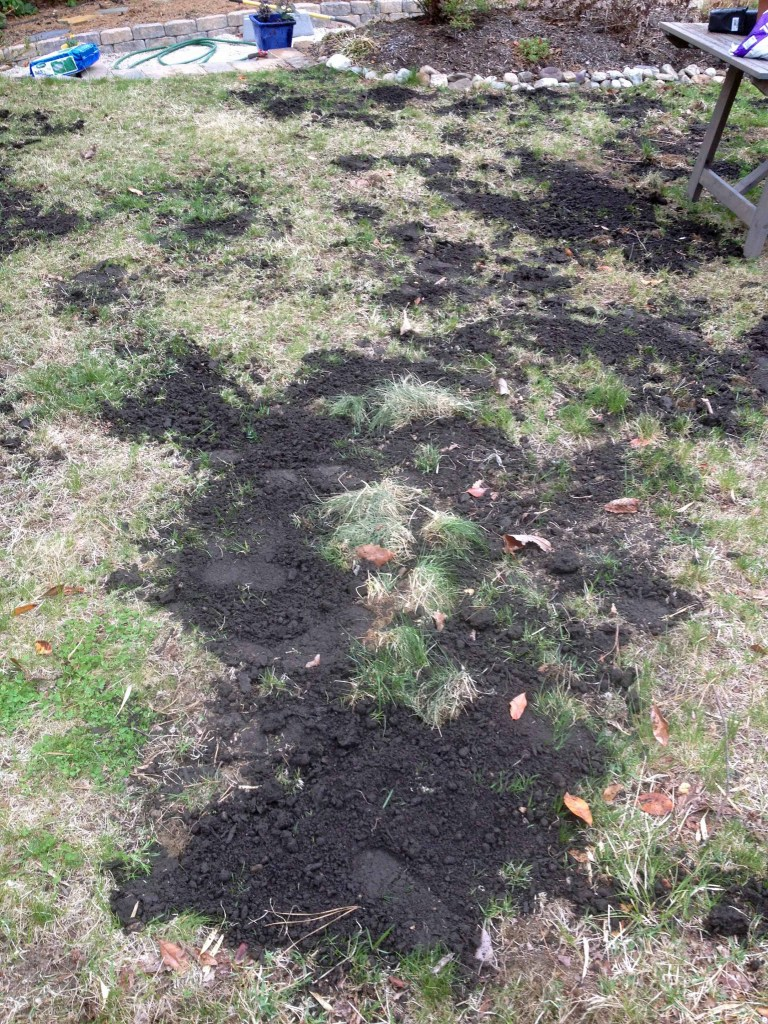 bare spots filled with top soil - ready to overseed this lawn