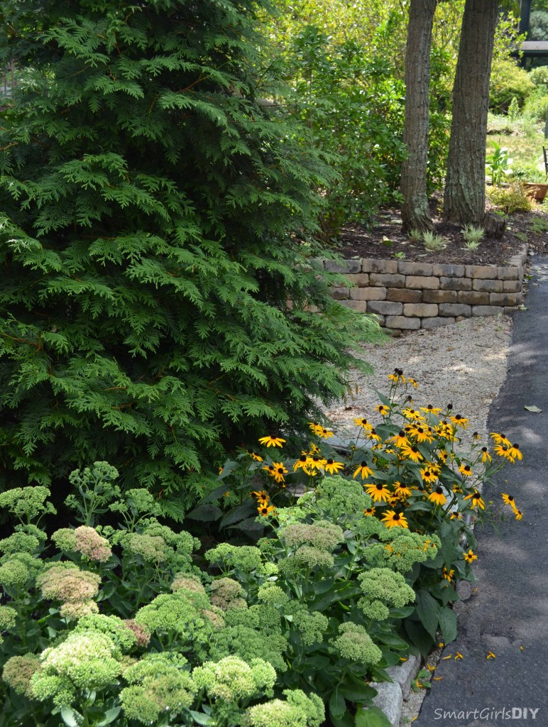 Green giant arborvite - black-eyed susan - sedum
