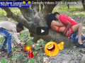 Funny videos best of 2019: They were caught in the act