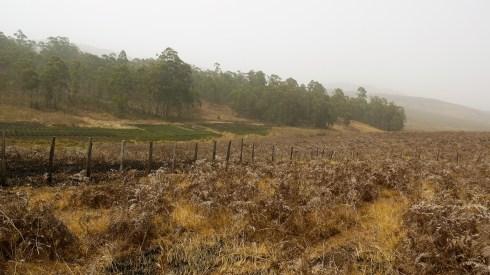 Arabica Coffee Farming Site (Northwest)