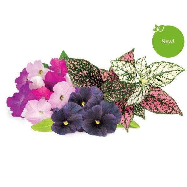 Click and Grow Smart Garden Refill 9-pak - Blomster Mix