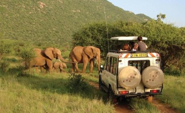 Wildlife-Safari kenya