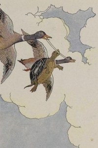 THE TORTOISE AND THE DUCKS – Aesop Fables for Kids