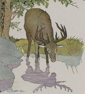 THE STAG AND HIS REFLECTION – Aesop Fables for Kids