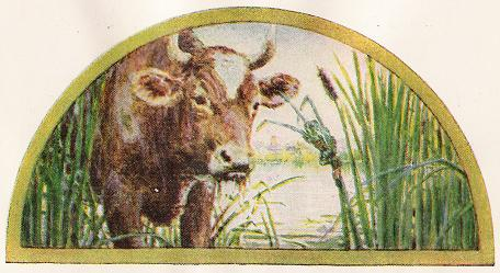 The Frog Who Wished To Be As Big As The Ox – Jean De La Fontaine Fables