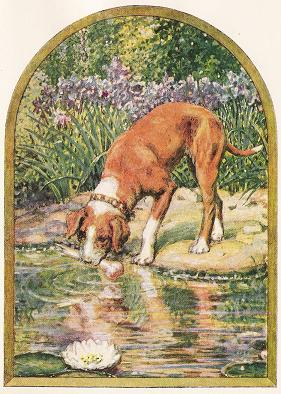 The Dog And His Image. – Jean De La Fontaine Fables
