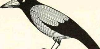 THE-FOX-AND-THE-BLACKBIRD-01