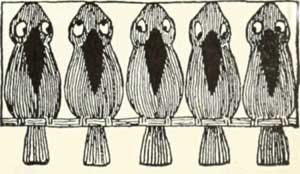 THE-FOX-AND-THE-BLACKBIRD-02