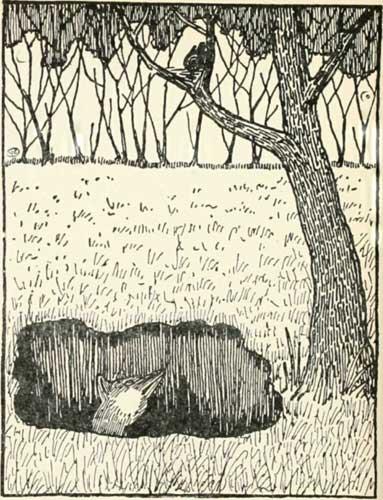 THE-FOX-AND-THE-BLACKBIRD-03