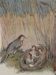Aesop-Fables-for-Kids-95