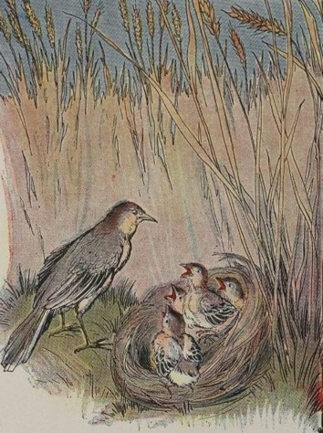 THE LARK AND HER YOUNG ONES - Aesop Fables for Kids