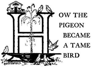 16 How the Pigeon Became