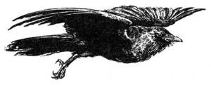 54 WHY CROWS ARE POOR