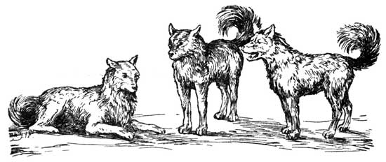 WHY THE INDIAN LOVES HIS DOG – Stories the Iroquois Tell Their Children by Mabel Powers