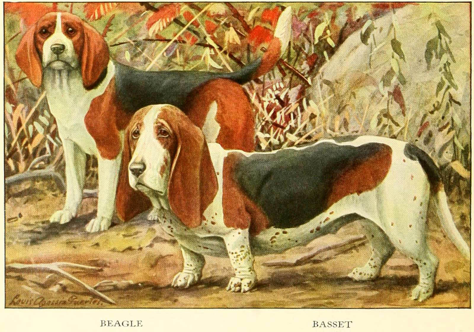 You are currently viewing BASSET DOG  – Information About Dogs