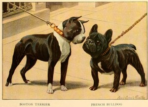 Read more about the article FRENCH BULLDOG – Information About Dogs