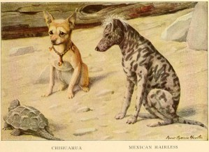 CHIHUAHUA DOGS – Information About Dogs