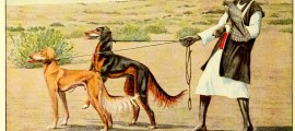 Slughi – Persian Gazellehound – Information About Dogs
