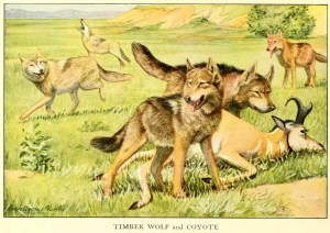Read more about the article Wolves And Coyotes – Information About Dogs