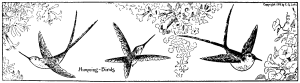 Art for kids to draw - Humming Birds - Easy animal drawings 4