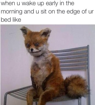 waking up early meme