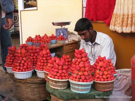 Strawberries Mahabaleshwar