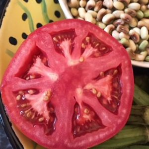 jacksonville tomato