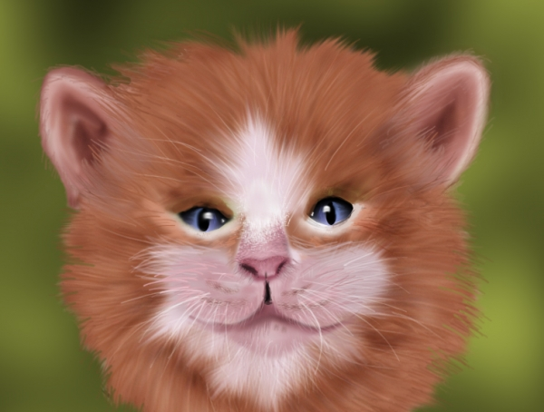Create Realistic Cat Fur 35 Fresh and Useful Photoshop Tutorials