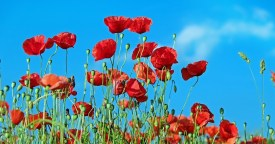 Does Tall Poppy Syndrome really impact business owners in New Zealand?