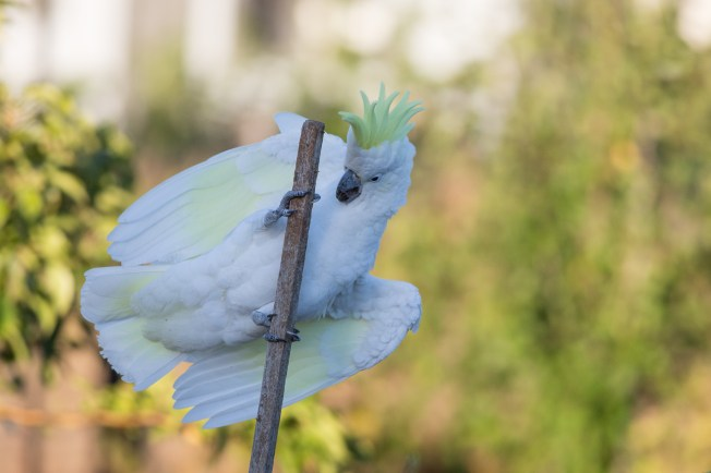 20170308_065210_Birds_146A3689