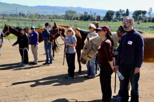 group with horses outside the stable