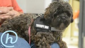 Eastipedia: Ella the Therapy Dog