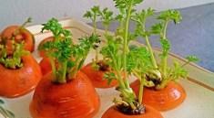 Овощи на подоконнике