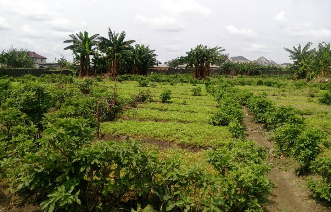 Peatuce is on a Mission to Improve Local Food Trade Within and Across Africa