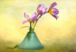 09. Three Tulips