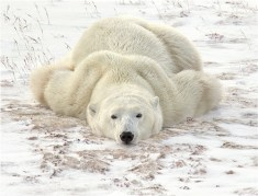 14. Relaxing on the Tundra by Michael Windle