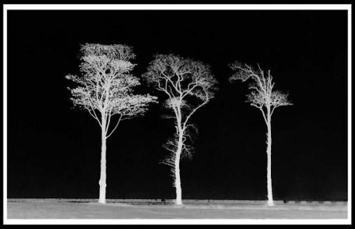 5 Winter Silhouette