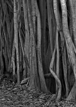 8.Tangled trees
