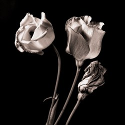 Bronze Flowers
