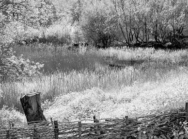 Reedbed