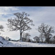 commended-winter trees-cheryl leyser