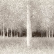 pagb gold medal- poplar grove-irene froy -england