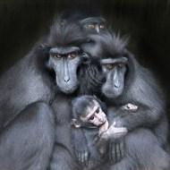 First-Crested Macaques & Baby-Robert Jones