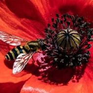 Highly Commended-Pollen Seeker-R Derek Wilbraham