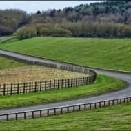 Road Curves-Harvey Bird