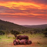 -Zulu Dawn-Peter Herreaman CPAGB