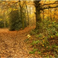 Commended-Autumn-Keith Clarke