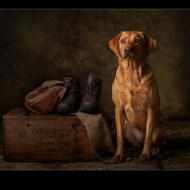 Commended-Faithful Companion 6861-Philippa Wheatcroft
