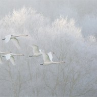 Five Swans over frosty valley-Paul Keene